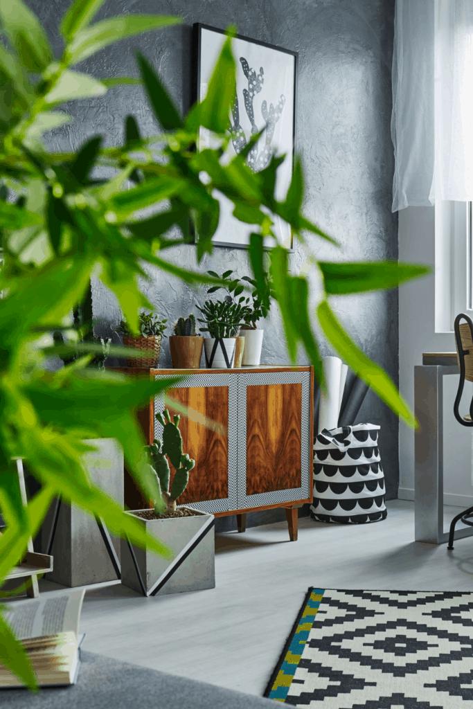 plants in cozy minimalist home