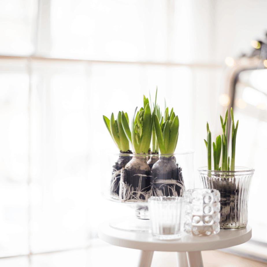 minimalist decor essentials